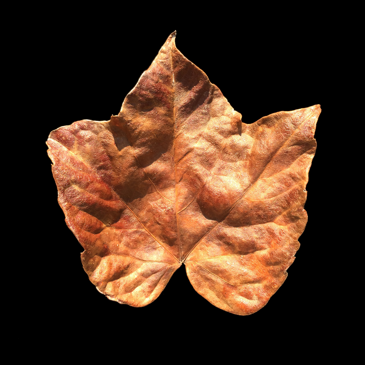 brown_Leaf.www.1